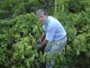 Kevin-with-grapes-in-Priorat