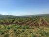 Top of Minis vineyard. 300 plus metres.